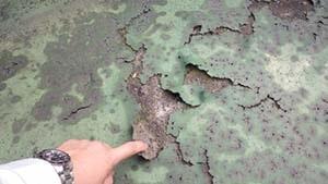 屋上のウレタン塗装膜